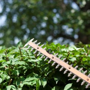 Using a hedge trimmer to trim the bushes.