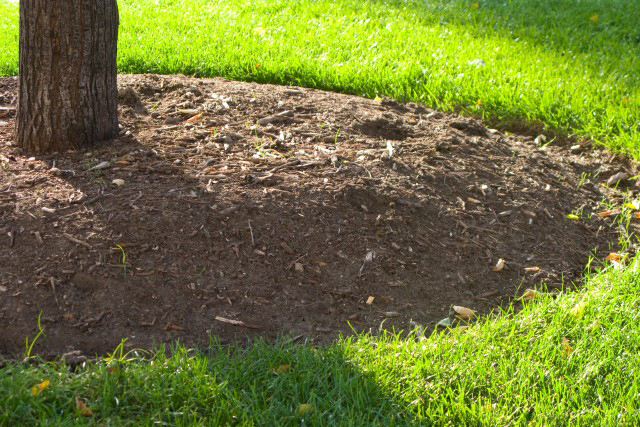 Mulching Upholstery Cleaning Northern Beaches