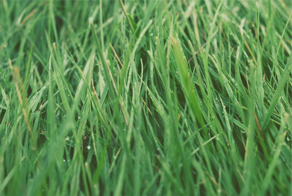 autumn lawn care green